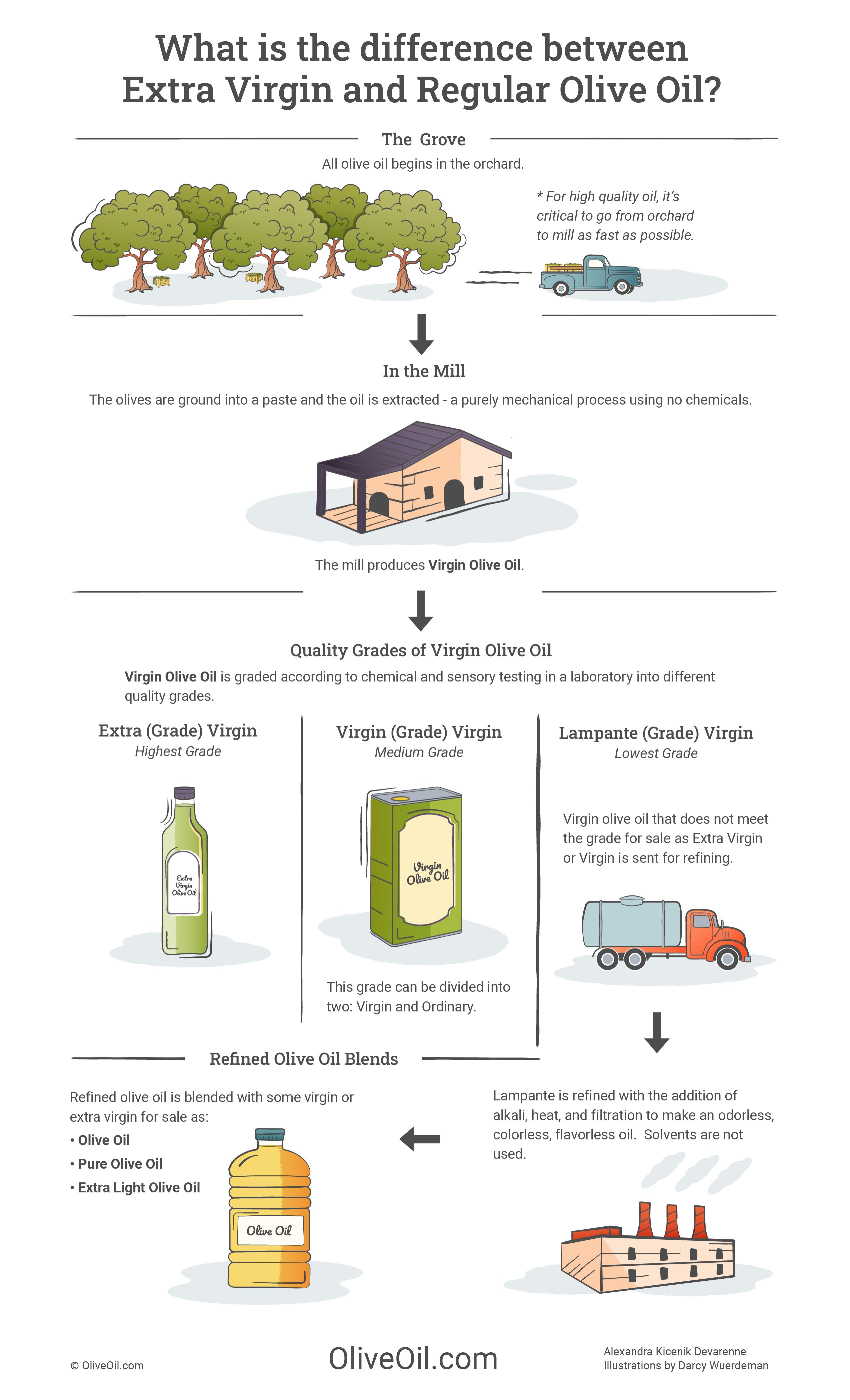 Extra Virgin Olive Oil vs Regular infographic